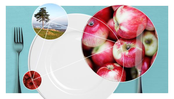 The New Nordic Diet - from Gastronomy to Health  from University of Copenhagen…