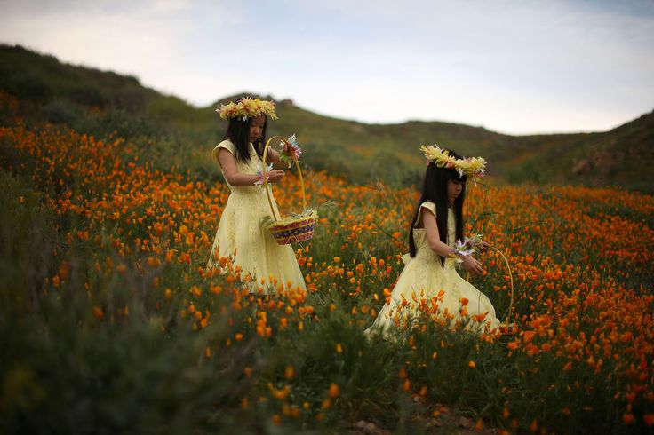 Julia Lu, 5, (left) and Amy Liu, 5, walk through a massive spring wildflower bloom caused by a wet winter in Lake Elsinore, California, on March 14, 2017.