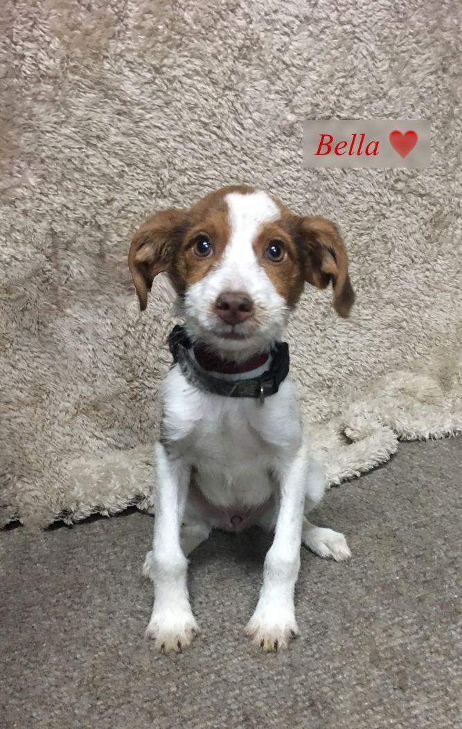 Adopt Bella On Pet Adoption Dogs Adoption