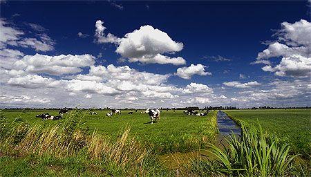 Polder (Utrechtse rug)     Pays-Bas > Province d'Utrecht  Située au centre des Pays-Bas, la province d'Utrecht possède une densité de population très élevée. Elle se trouve dans la Randstad, une gigantesque conurbation dont fait également partie Rotterdam.