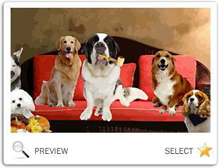 Thanksgiving Wishes ecard with dogs