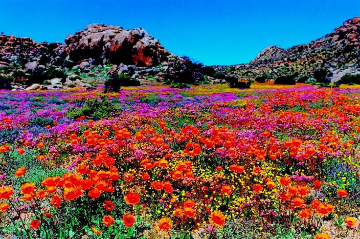 Vibrant colors from Goegap Nature Reserve, South Africa