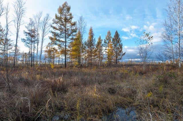 Осеннее настроение - легкая грусть по ушедшему лету, но как приятно наблюдать осенние пейзажи, которые радуют глаз
