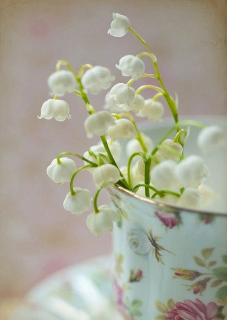 lily of the valley: Lily, Lilies, Valley, Flowers, Tea Cups, Garden, Teacup, Favorite Flower