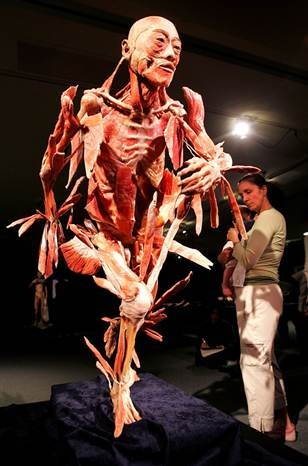 Experience Bodies The Exhibition showcasing real full-bodies and organs, providing a detailed, three-dimensional vision of the human form rarely seen outside of an anatomy lab.