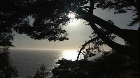 Julia Pfeiffer Burns State Park, Big Sur, Costa del Pacifico, Scintillare, Ramo, Conifera, Specchiare, siluette, Tramonto del sole, Sera, Costa, Nessuno, Stock Footage,