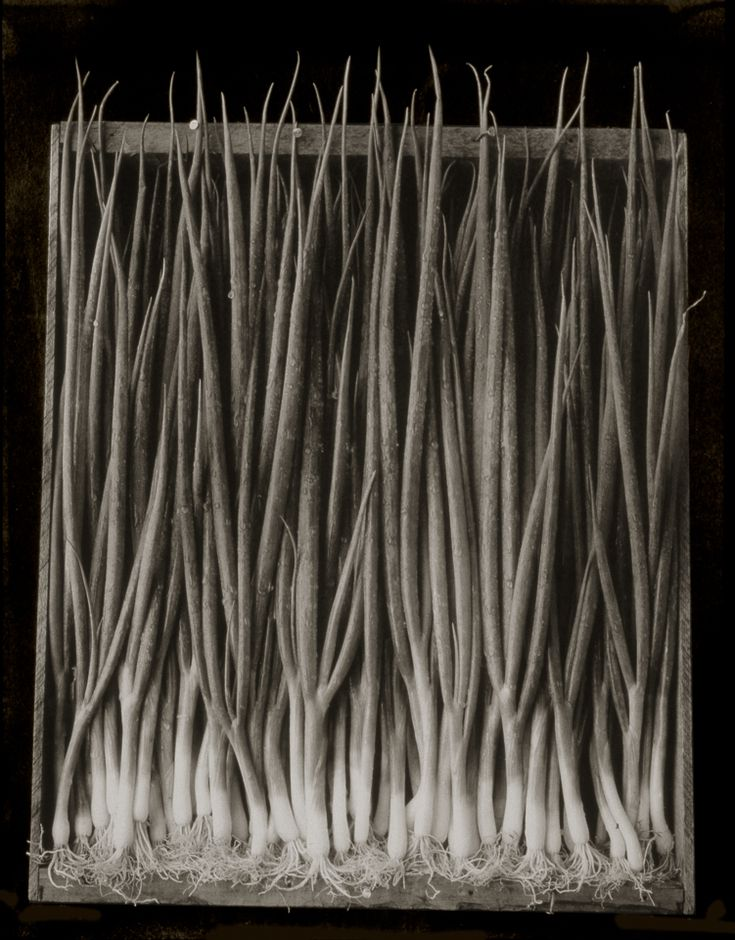 Scallions ©Cy DeCosse Fine Art Photography. The Beauty of Food Collection. Limited edition platinum-palladium print. CyDeCosse.com #photography #art #food