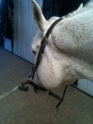 Areas that are often overlooked while grooming...  proequinegrooms.com