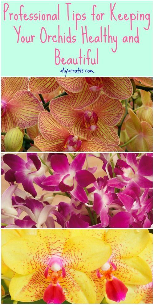 Die richtige Orchideen Pflege: http://www.baldur-garten.ch/onion/content/ox5658_23default_26language_3Dde?gclid=CP2glcvAoMQCFe7MtAodLkgAHw Nun bleiben die Orchideen lange schön :)!