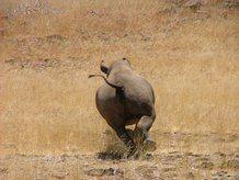 Save the Rhino Trust Namibia - African Rhino Programmes - Save the Rhino