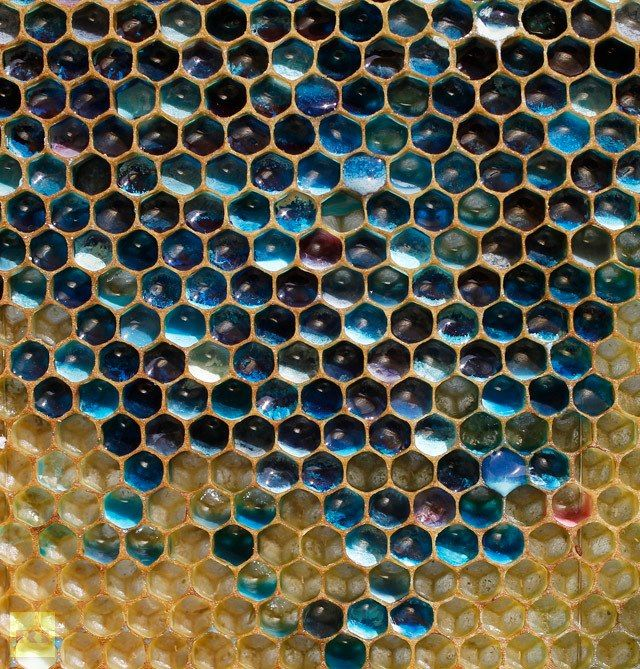 Bees in the Ribeauvillé region of France confused apiarists recently by making blue and green coloured honey.