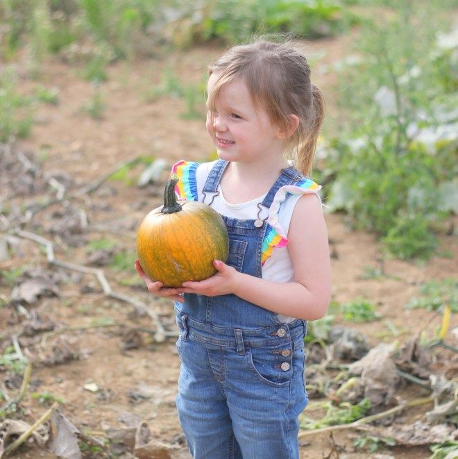 pumpkin picking - roundstones - little button diaries