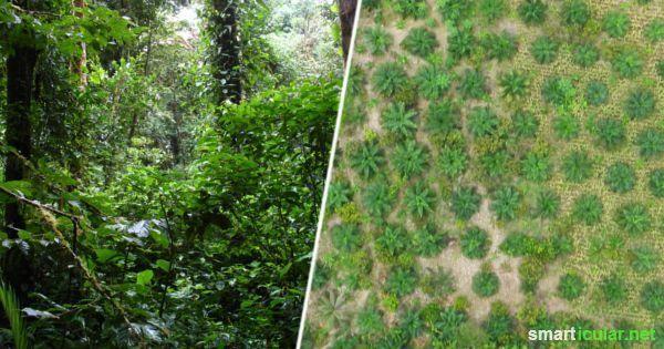 Gute Gründe weshalb du lieber auf Palmöl verzichten solltest