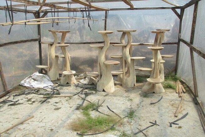 Meja jamur  #handicraft #wood #beautiful #beauty #art #vigor #kerajinan #kayu #teakroot #akarjati #kuat #indah #keindahan #indonesia #indonesian #industri #jati #table #meja #tunggak #perabot #furniture #mebel #gembol #akar #decoration #homedecor