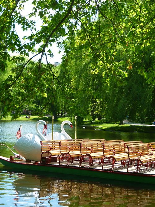 Swan boat, Boston Public Garden . Get sensory, hands-on activity ideas for teaching THE TRUMPET OF THE SWAN by E.B. White at http://www.litwitsworkshops.com/free-resources/the-trumpet-of-the-swan/  LitWits Kits make great books real and fun for kids!