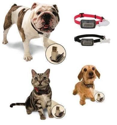 Rescue Dog Collar