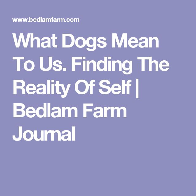 What Dogs Mean To Us. Finding The Reality Of Self | Bedlam Farm Journal