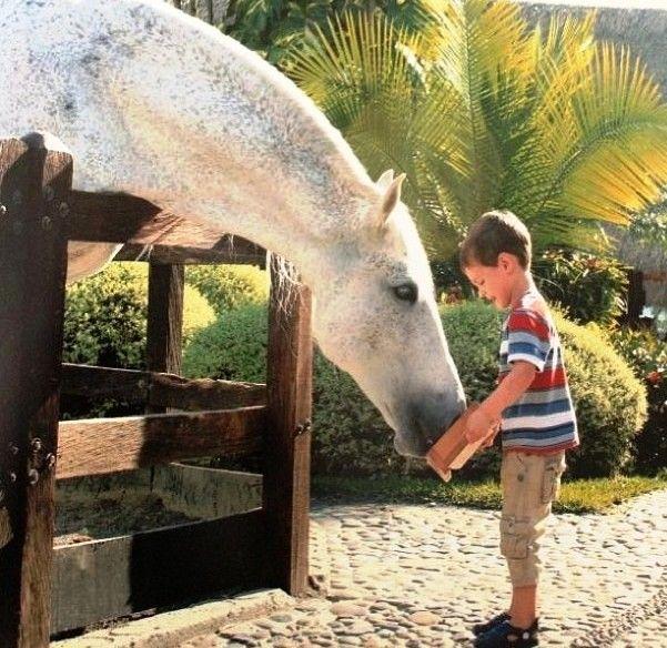 Conoce las diferentes razas de caballos