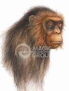 Dendropithecus - Bing Images