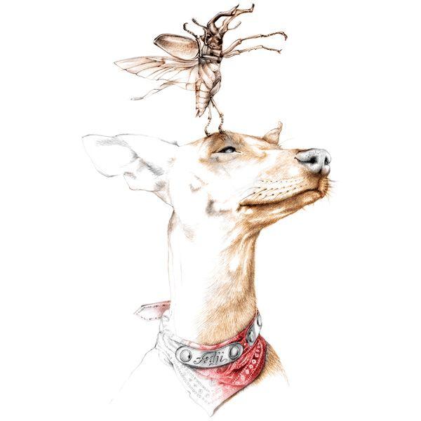 Illustration chien Pincher et lucane Florence Gendre