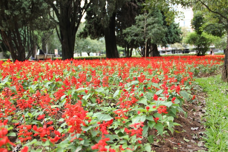 Philips #pinyourcity contest: Living in Belo Horizonte is ... appreciating the flowers on the Praça da Liberdade! by Marcelo Fonseca