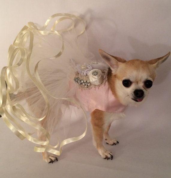 14 best dog christmas dress images on Pinterest | Dog dresses ...