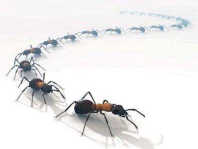 pièges à fourmis
