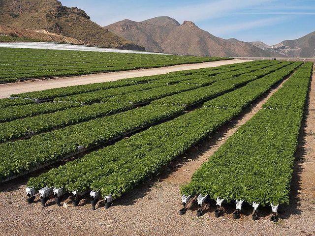 Kebun Sayuran Hidroponik
