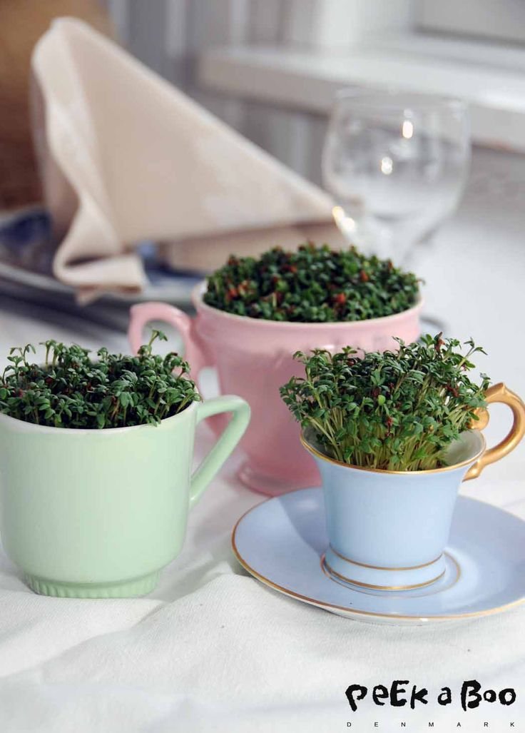 plant indoor sprouts for Christmas presents? Pastel herbs...DIY use your old china...