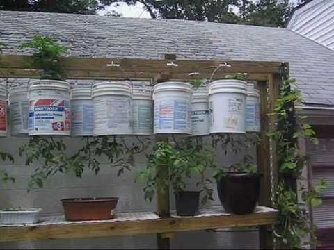 Upside Down Hanging Vegetable Garden — Containers, Plastic Drums, Bags, and Toi…