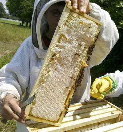 Beekeeping Tips – Carolina Honeybees Farm