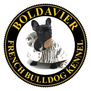 "Our french bulldogs ""Boldavier"""