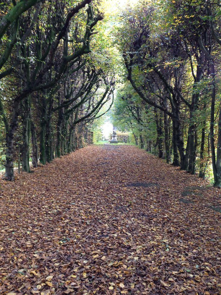 De bomenlaan bij kasteel Eijsden in herfsttooi.