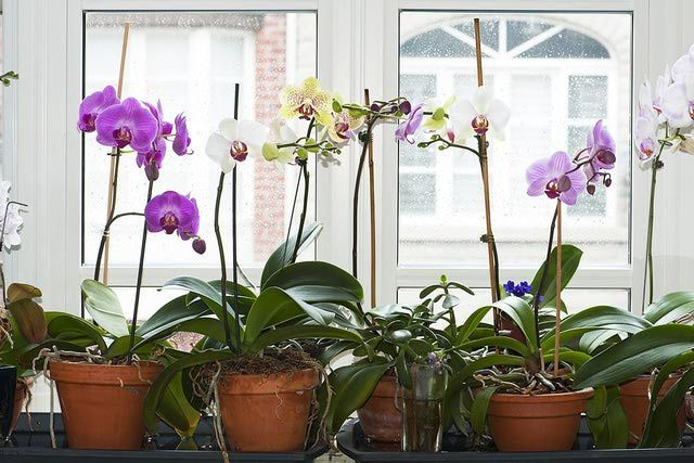 If you have these 6 essential orchid supplies, your plant will be ready to bloom and thrive.