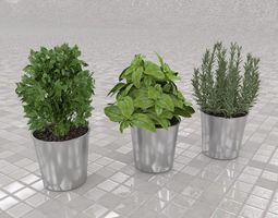Culinary herbs 3D Model