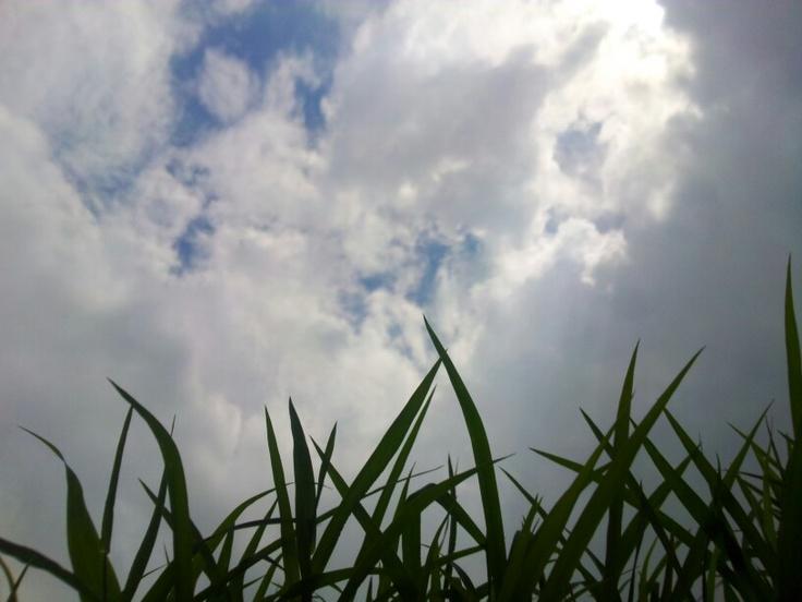 Cloud over grass