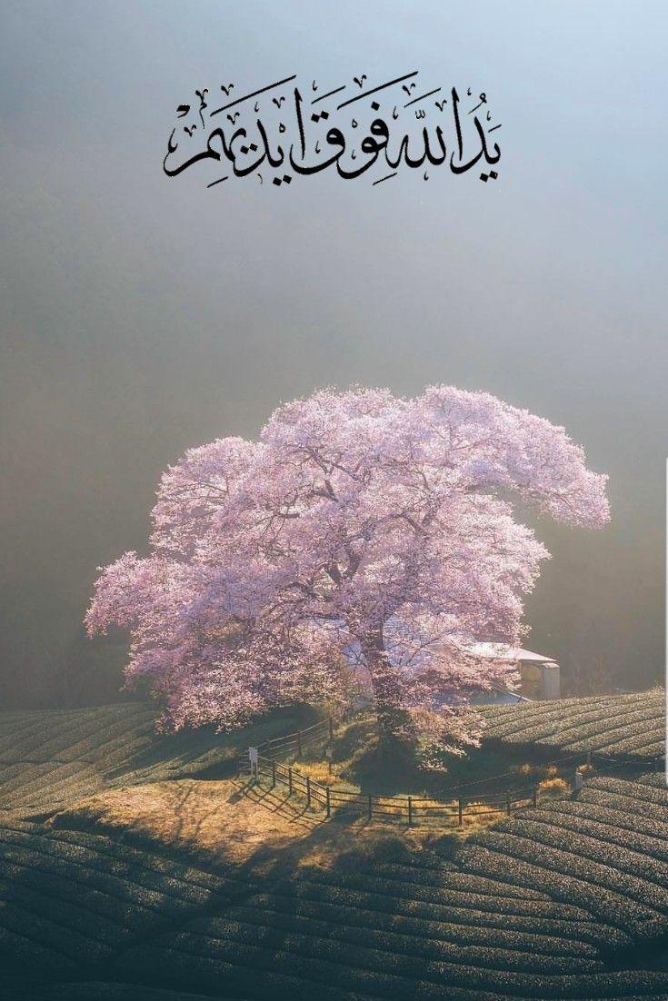 قرآن كريم آية يد الله فوق أيديهم Prayer For The Day Islamic Quotes Prayers