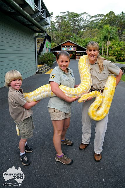 Robert, Bindi and Terri Irwin moving Alimah the albino Burmese Python at Australia Zoo, Beerah, Sunshine Coast.