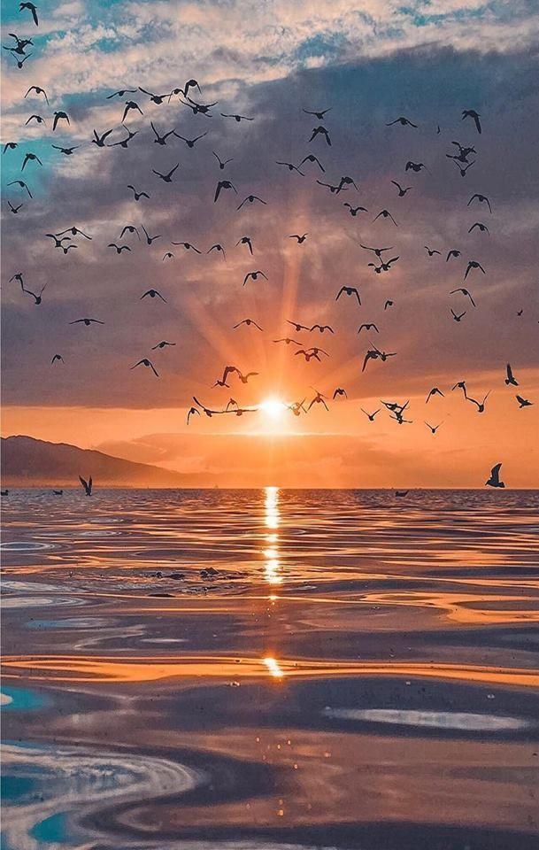 Fantastische Vögel für das GLÜCK dieses Sonnenaufgangs.