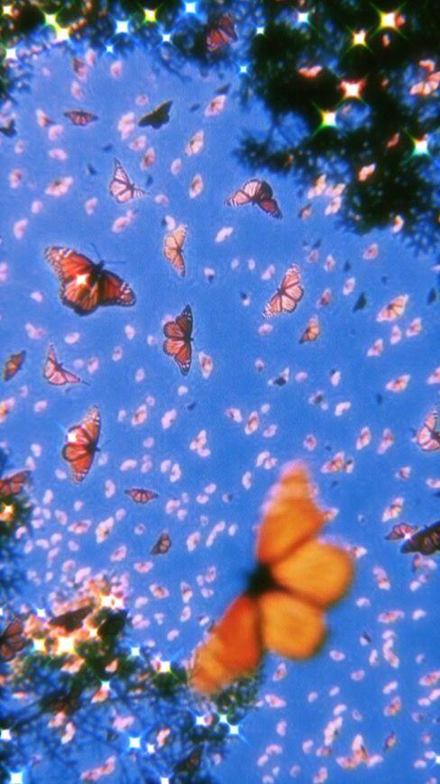 butterflies | Aesthetic wallpapers, Butterfly wallpaper ...