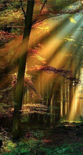 Rayos de luz en el bosque negro de Schwarzwald, Alemania.