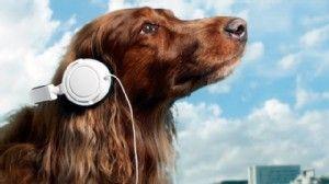 La vita è un viaggio musicale 2^ parte