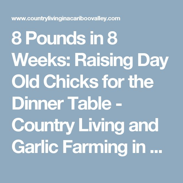 8 Pounds in 8 Weeks: Raising Day Old Chicks for the Dinner Table - Country Living and Garlic Farming in BC