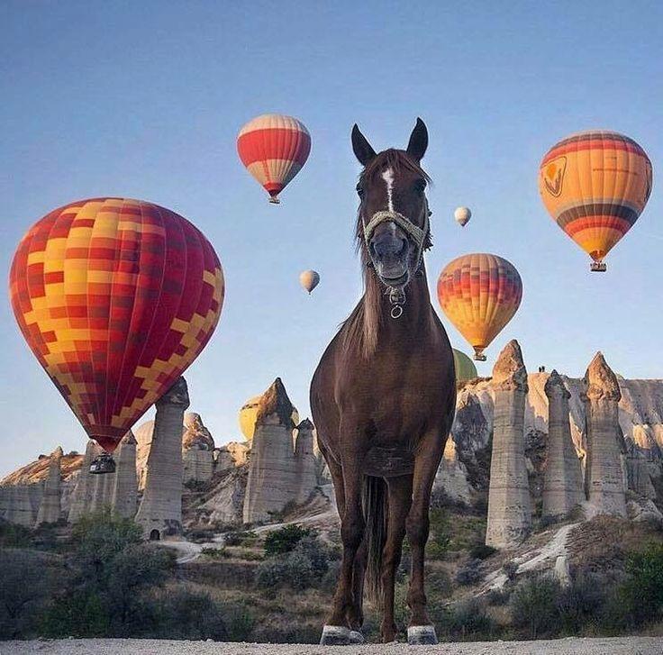 Для того, щоб потрапити у власну казку верхи на королівському коні, немає кращого місця, аніж Кападокія! #Turkey #HomeOf #Cappadocia  Фото : @metinnurlu