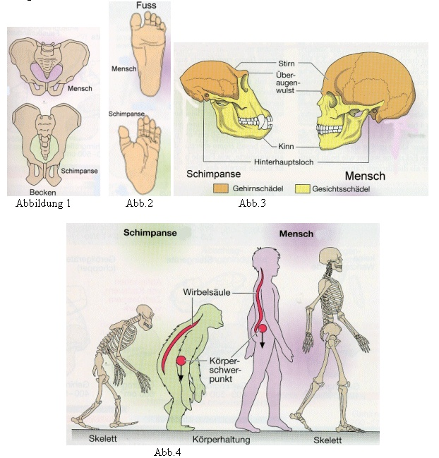 406 Best Animal Anatomy Images On Pinterest Anatomy Reference