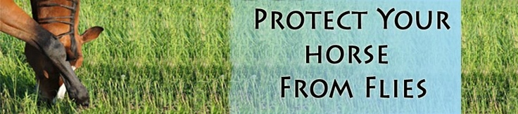 How to Protect Your Horse From Flies - Build a fly repellent armor with fly sheets, fly masks, fly boots, fly spray and more. Learn what you'll need to keep your horse happy during summer months.