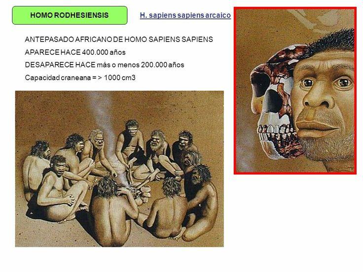 Homo rhodesiensises unaespeciede homínidofósildel géneroHomo, hallado por primera vez en1921en la localidad llamada por los inglesesBroken Hill, actualmente Kabwe, enZambia. Se considera que vivió solamente enÁfrica, desde hace 600000 hasta 160000 años antes del presente, durante elIoniense.