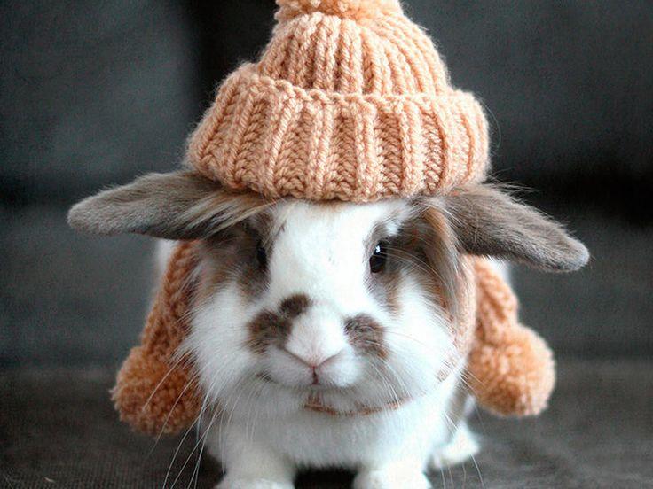 Vestido de invierno… (Mascotas Conejos)