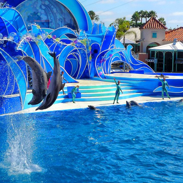 Your Don't-Miss-a-Thing Visitor's Guide to Sea World San Diego: Sea World San Diego Visitor Guide