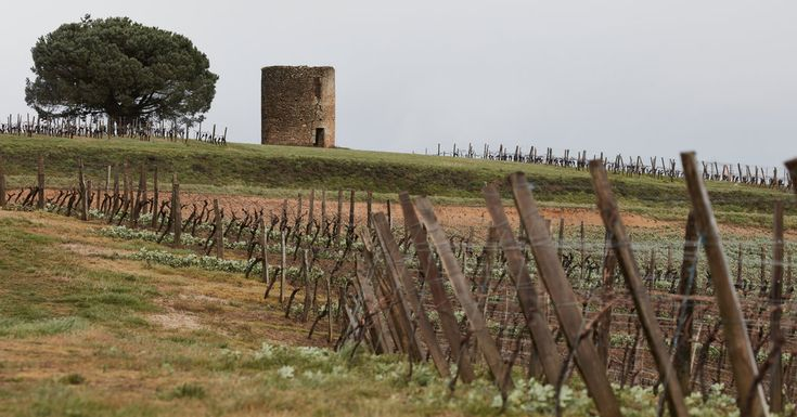 NYT:  Gascony. Even a week or so spent eating and drinking your way around this rural area of southwestern France is enough to spark a lifelong love affair.